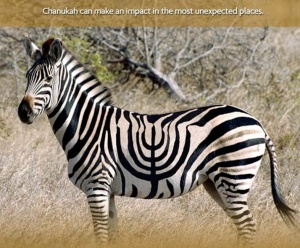 Chanukah-zebra